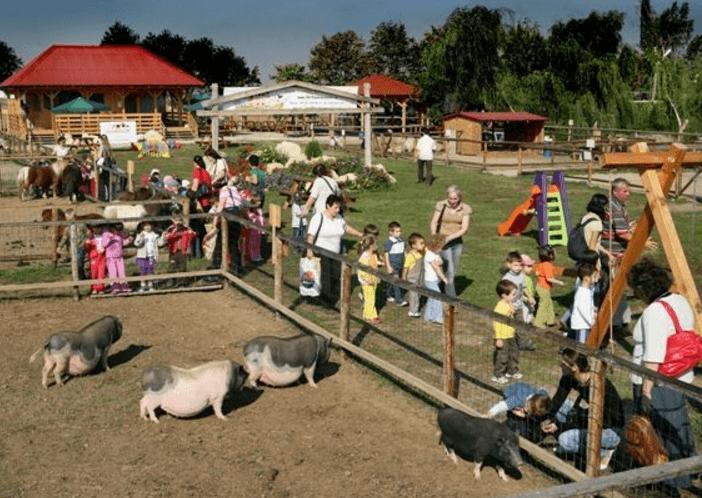 Ferma-Animalelor